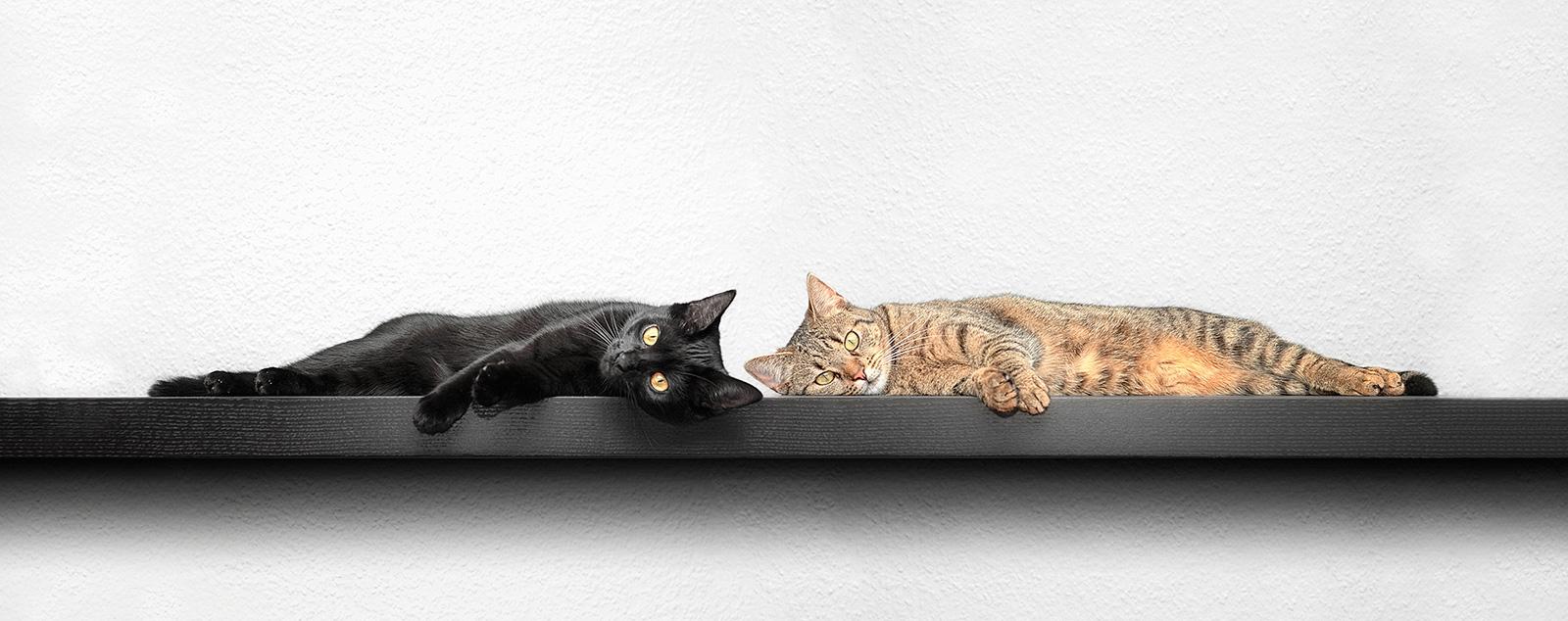 SIGADesign Fotografie Katzen