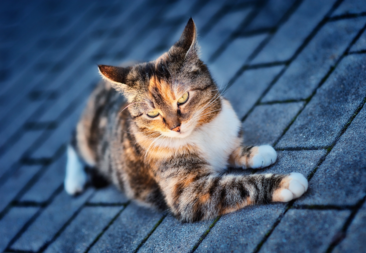 SIGADesign Fotografie Katze